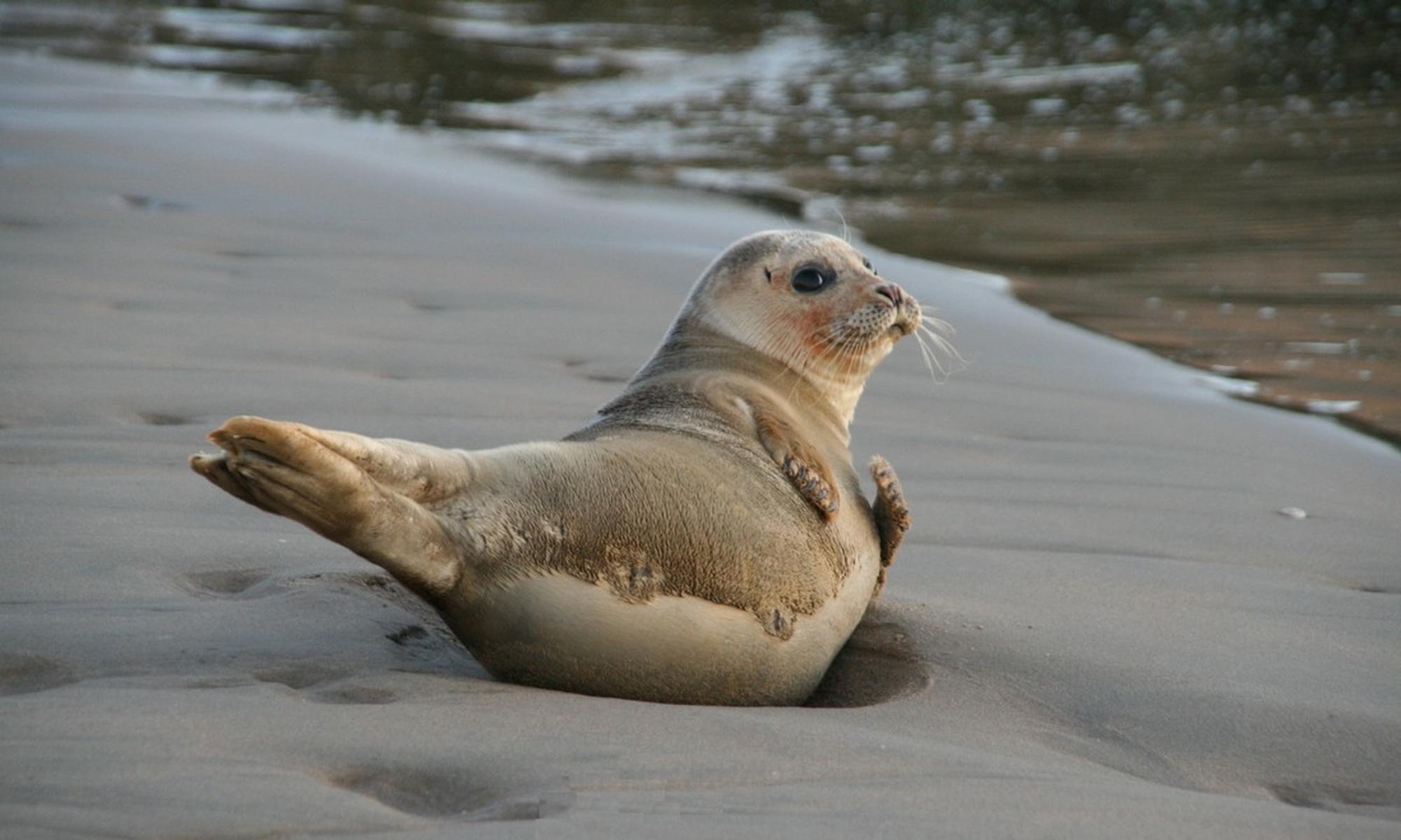 Stichting ReddingsTeam Zeedieren